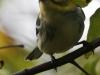 warbler (10 of 14)