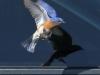 Blue bird -12