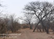 Botswana Chobe safari landscape -1