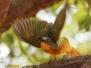 Botswana Africa Chobe National Park safari birds October 17 2016
