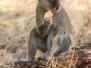 Botswana Africa Chobe National Park wildlife October 17 2016