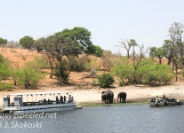 Botswana Chobe river elephants -1