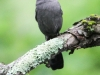 PPL Wetlands catbird (1 of 1).jpg