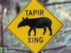 tapir (2 of 2).jpg