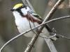 Lehigh Gap birds  (2 of 50)