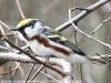 Lehigh Gap birds  (3 of 50)