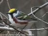 Lehigh Gap birds  (4 of 50)