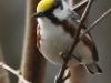 Lehigh Gap birds  (6 of 50)