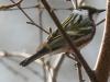Lehigh Gap birds  (8 of 50)