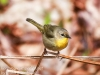 State game lands 119 birds -4