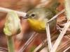 State game lands 119 birds -6