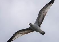 Community-park-birds-1-of-17
