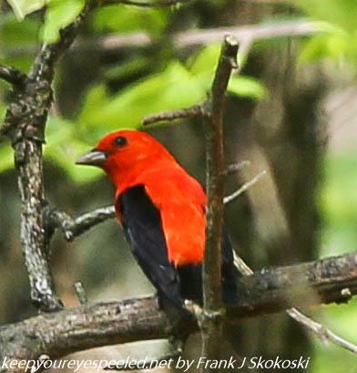 Glen Summit hike birds (1 of 25)