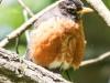 Glen Summit hike birds (18 of 25)