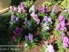 Dallas Texas Arboretum flowers-10