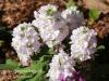 Dallas Texas Arboretum flowers-11