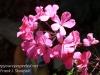 Dallas Texas Arboretum flowers-12