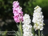Dallas Texas Arboretum flowers-13