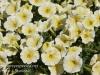 Dallas Texas Arboretum flowers-14