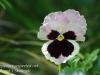 Dallas Texas Arboretum flowers-16