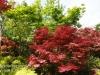 Dallas Texas Arboretum flowers-17