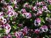 Dallas Texas Arboretum flowers-2
