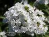 Dallas Texas Arboretum flowers-3