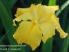Dallas Texas Arboretum flowers-5