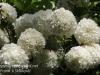 Dallas Texas Arboretum flowers-7