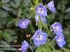 Dallas Texas Arboretum flowers-8