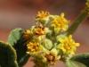 -Desert gardens macro-11