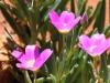 -Desert gardens macro-19