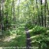 D-L-trail-hike-32-of-48