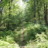 D-L-trail-hike-33-of-48