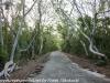 Key Largo back country hike  (13 of 40)