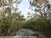Key Largo back country hike  (15 of 40)