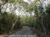 Key Largo back country hike  (16 of 40)