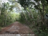 Key Largo back country hike  (21 of 40)