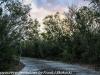 Key Largo back country hike  (3 of 40)