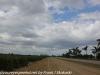 Anhinga drive (11 of 19)