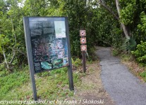 gumbo-limbo-trail-1-of-31