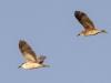 Everglades Anhinga morning walk birds  (12 of 39)
