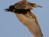 Everglades Anhinga morning walk birds  (15 of 39)