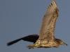 Everglades Anhinga morning walk birds  (16 of 39)
