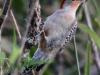 Everglades Anhinga morning walk birds  (2 of 39)