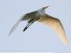Everglades Anhinga morning walk birds  (3 of 39)