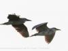 Everglades Anhinga morning walk birds  (4 of 39)