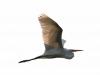 Everglades Anhinga morning walk birds  (6 of 39)