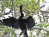 Everglades Anhinga morning walk birds  (8 of 39)