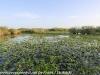 Everglades Anhinga morning walk  (12 of 42)